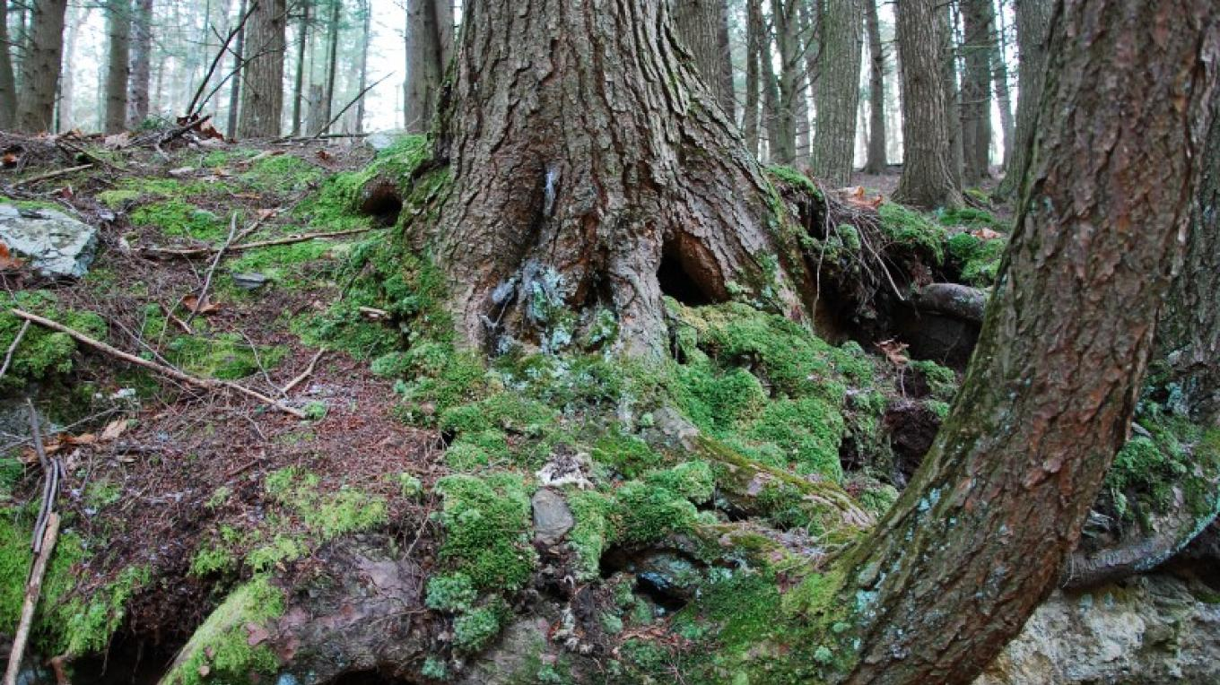 Forest is full of moss