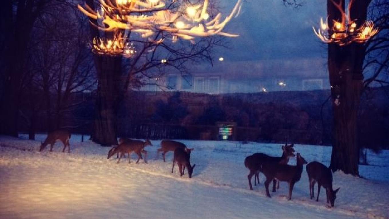 Winter View – Jim Heigis