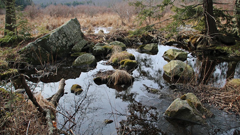 The marsh at Snow Shanty Trail. – Nancy J. Hopping