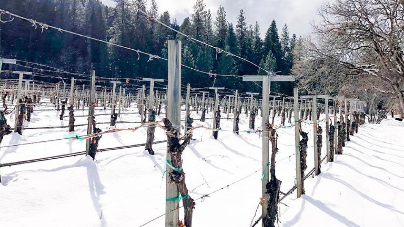 Snowy vineyard during the 2019 Thanksgiving.