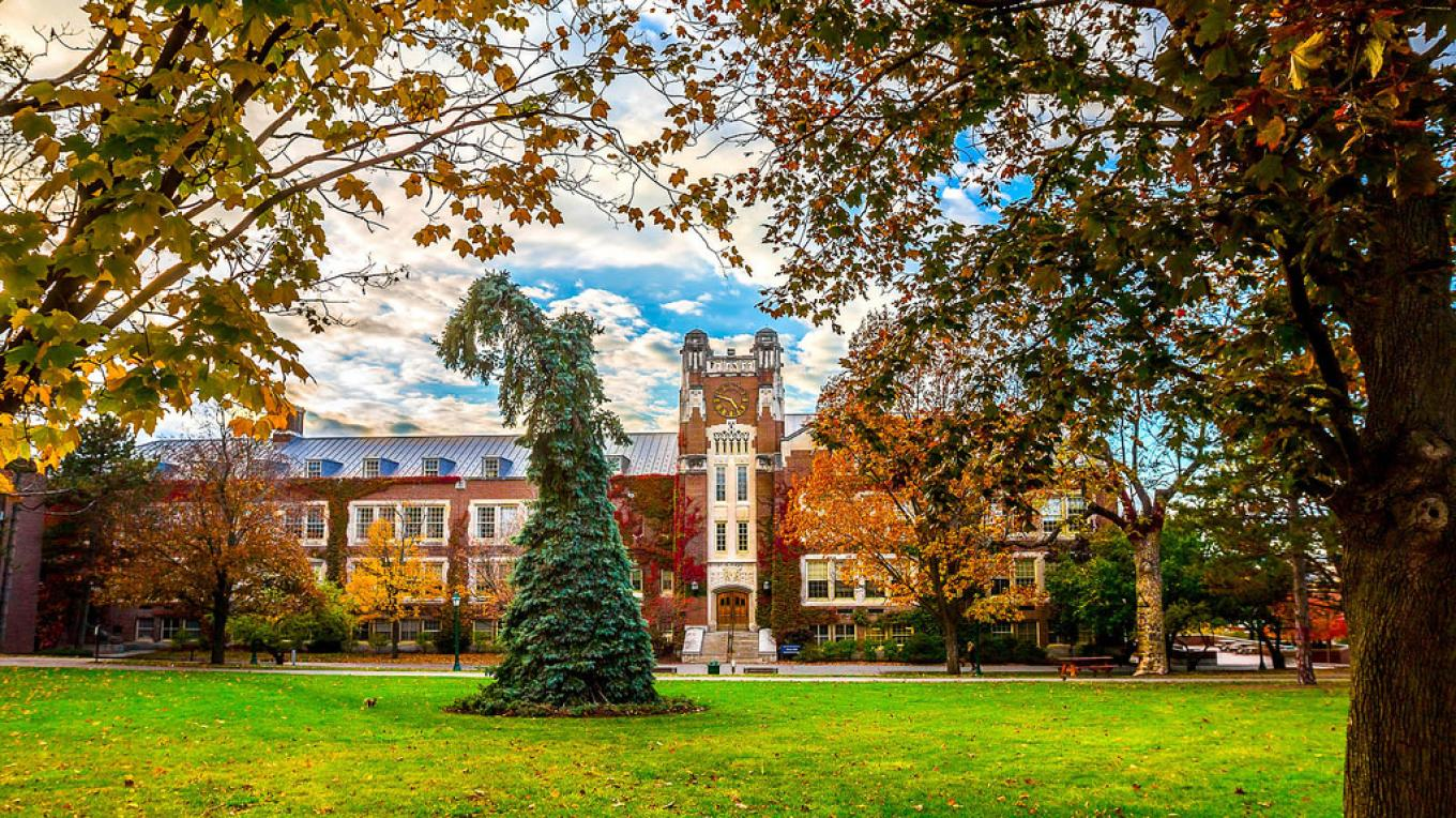 The Seuss Spruce, SUNY Geneseo  | Photo Credit: Keith Walters