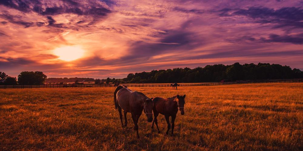 Photo credit: Keith Walters. Nations Road Horses