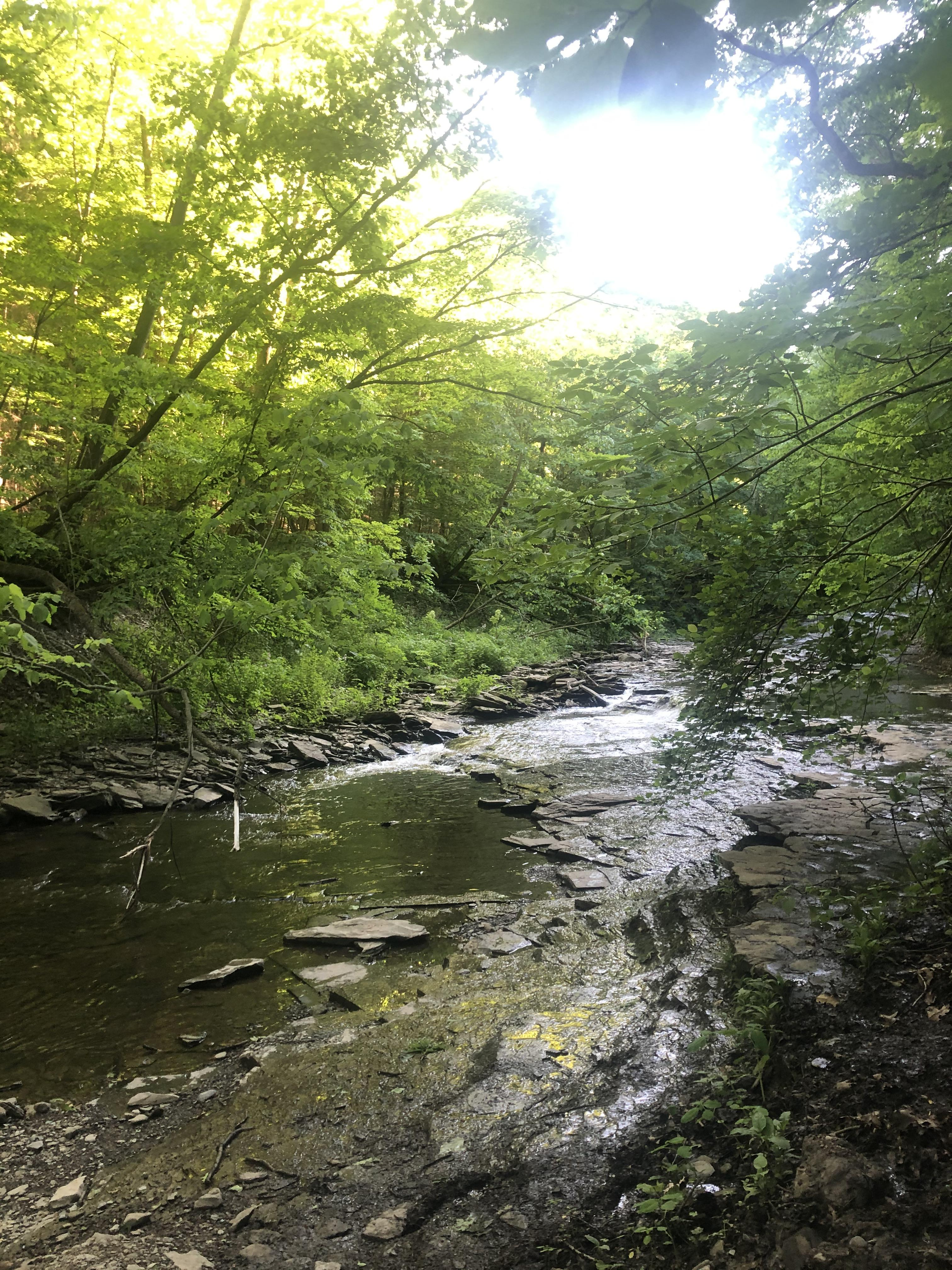Creek at Warsaw Falls