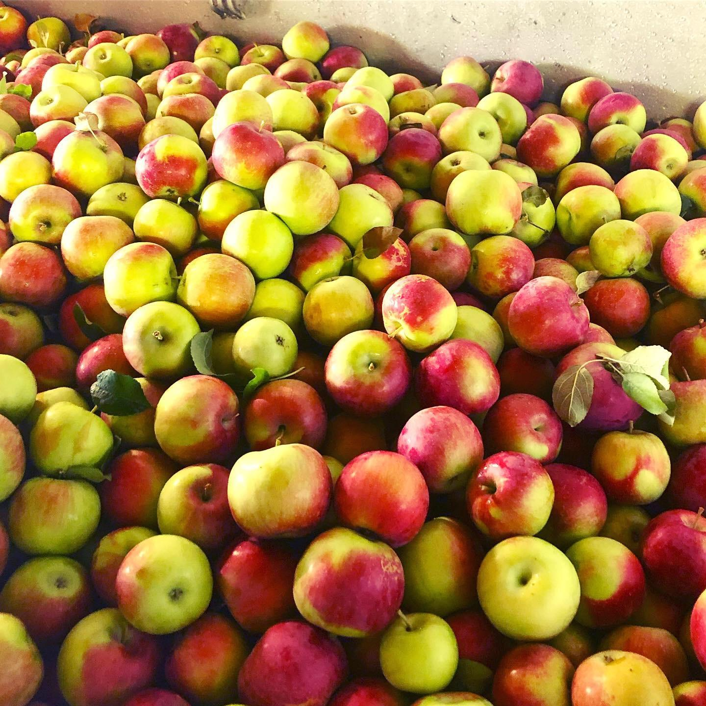 Cider Mill Apples