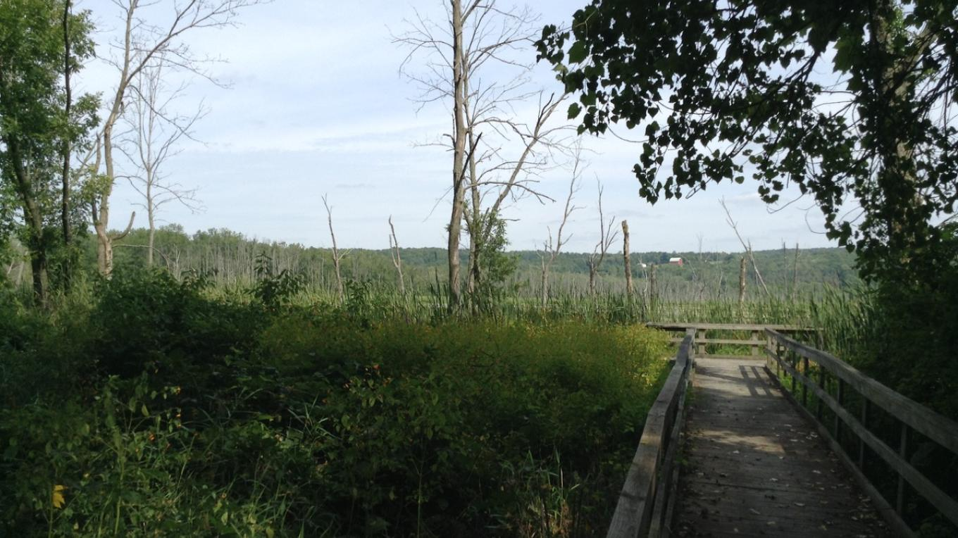Conesus Inlet Wildlife Management Area, along walking trail and docking (accessible from the south side of Sliker Hill Road)