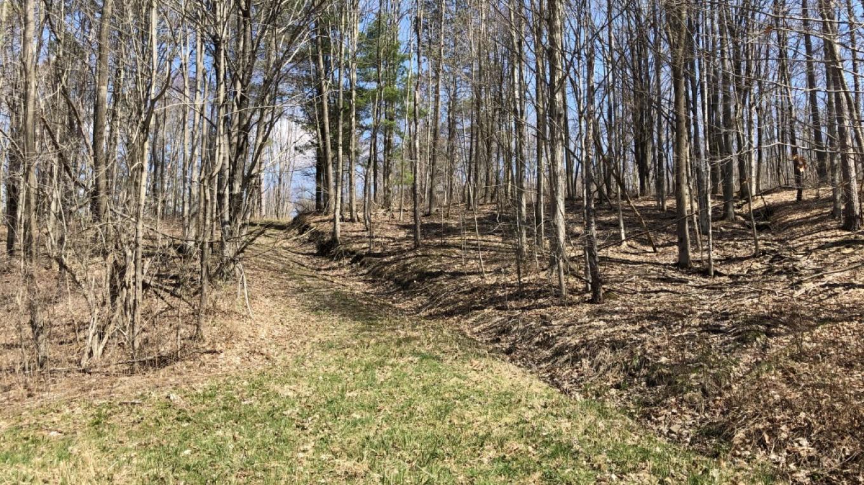Rattlesnake Hill Trail