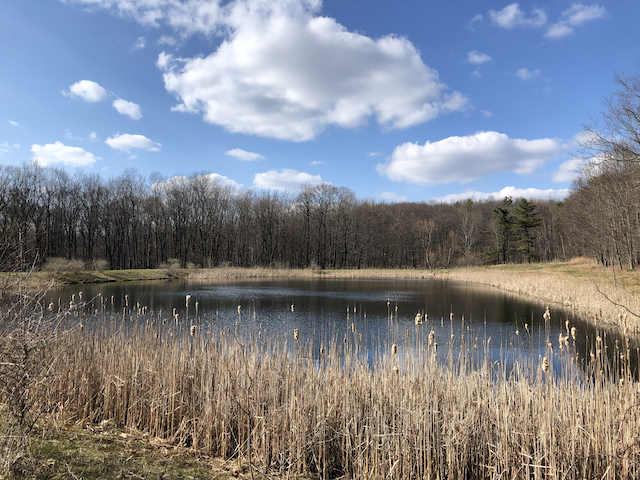 Red Trail Pond, Wesley Hill Nature Preserve