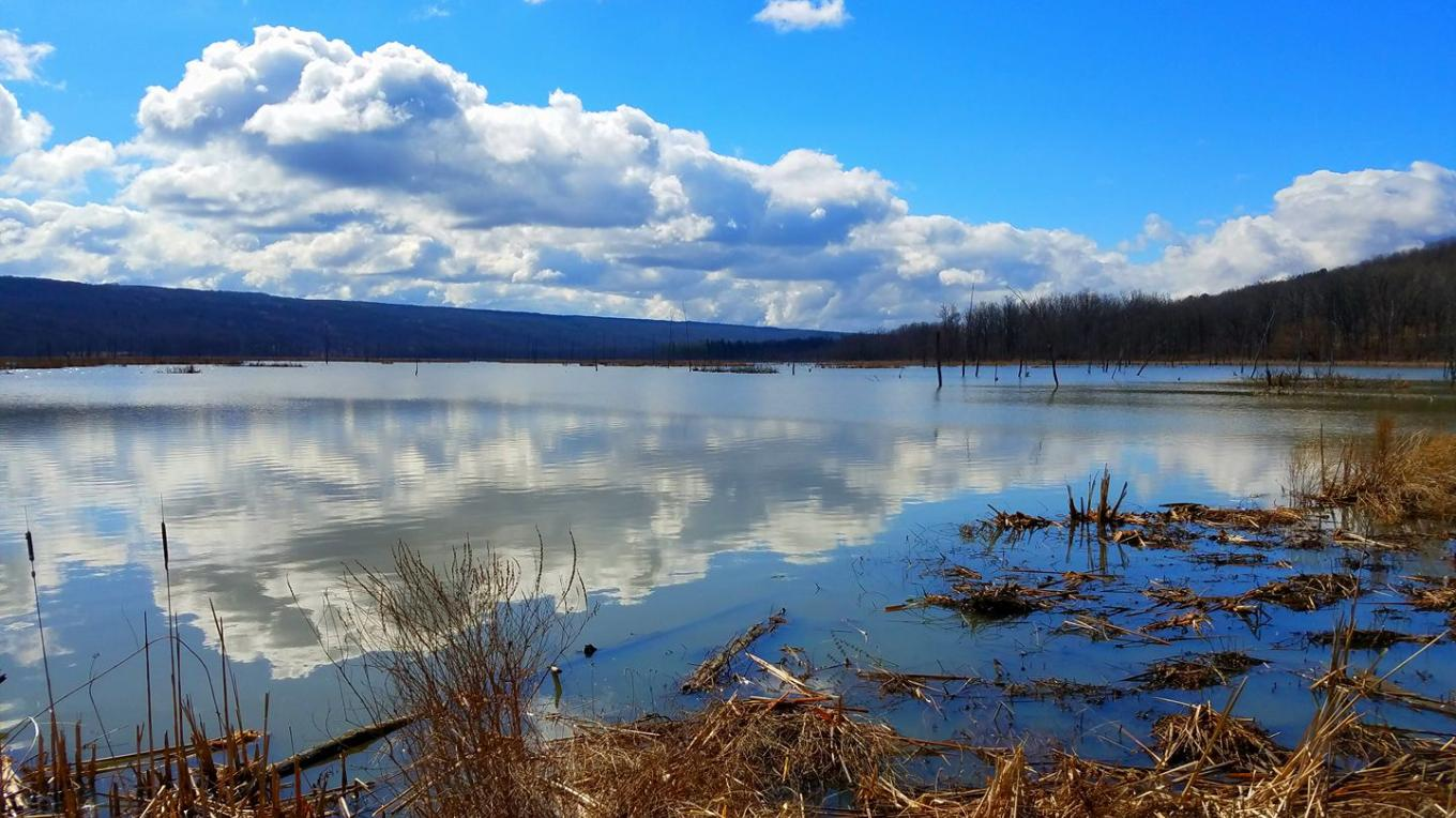 Conesus Inlet Wildlife Management Area, accessible from the south side of Sliker Hill Road – Photo: Curt Grant