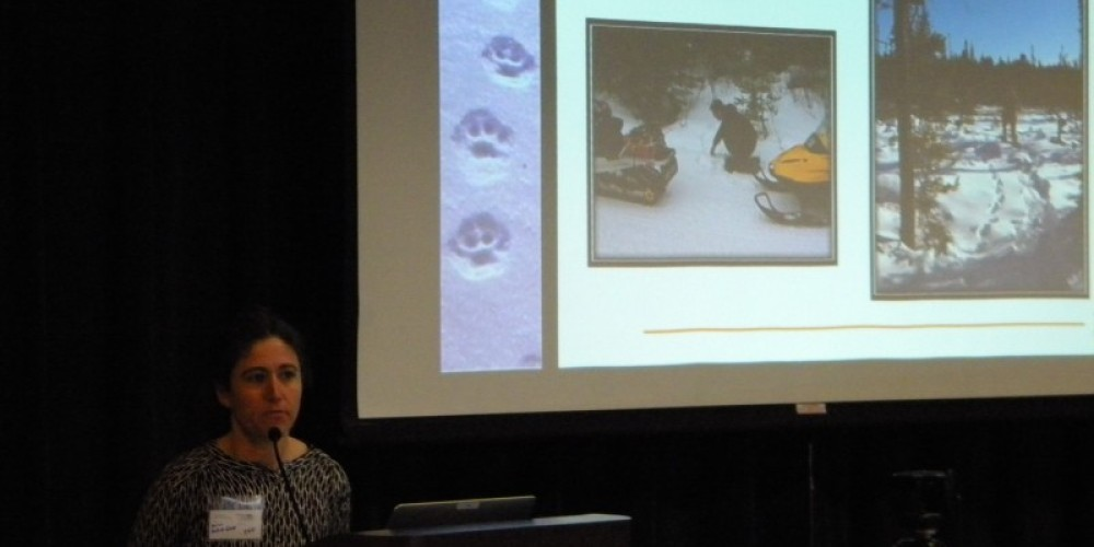 Sarah Malick-Wahls, USDA FS-SNF, The Superior National Forest's Canada Lynx DNA Database