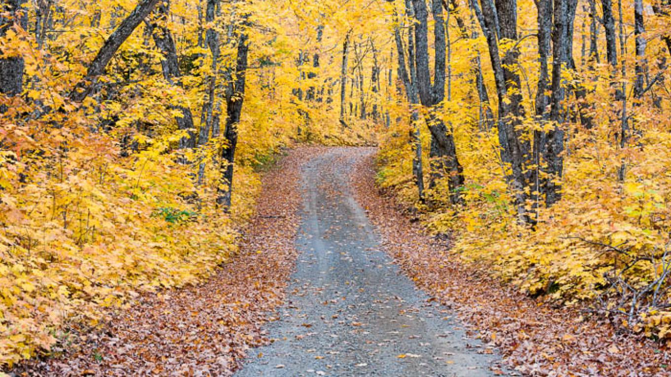 Fall color on a Forest Service Road. – Bryan Hansel
