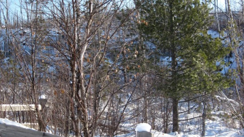 Paulson Mine winter – susan prom