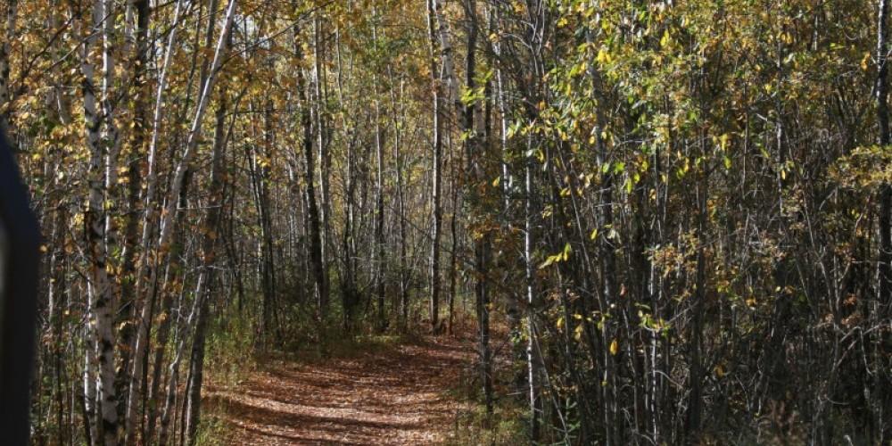 Berry Trail – MN DNR