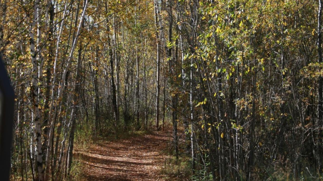 Berry Trail – MN DNR
