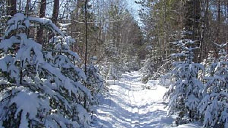 Banadad Ski Trail – Ted Young