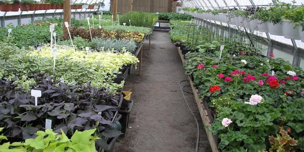 Unique greenhouse in rural country side south of Thunder Bay – Karen Breukelman, Meagan Breukelman