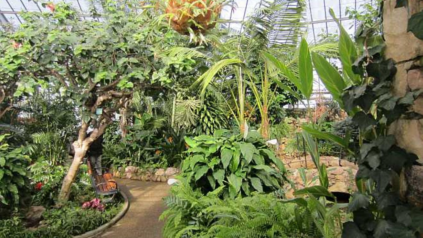 You will be amazed at the greenery and the colours of this tropical setting you have entered as you walk through the Conservatory doors. – Bonnie Schiedel