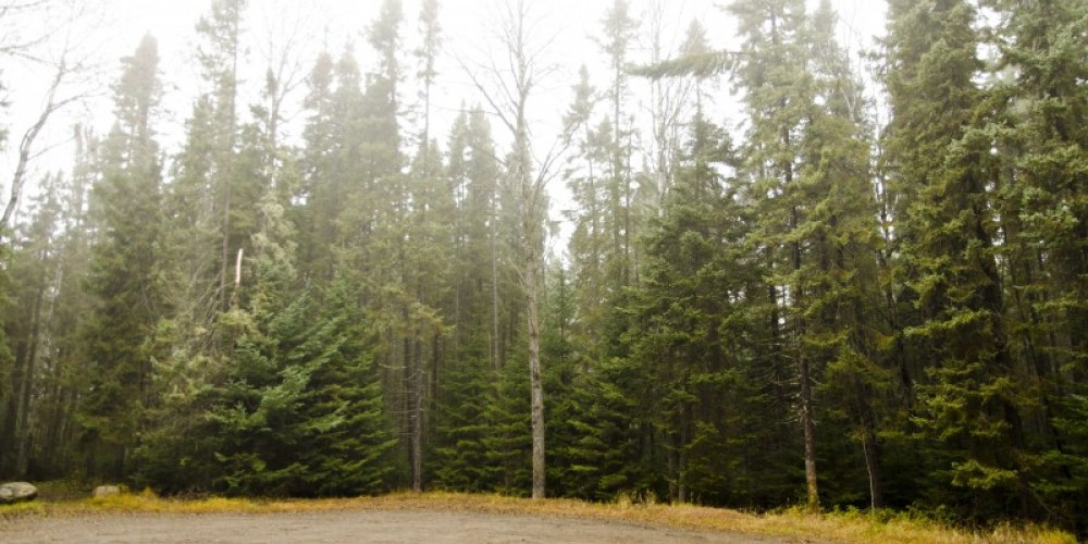 View of Wishart Forest treeline from parking lot – LRCA Staff