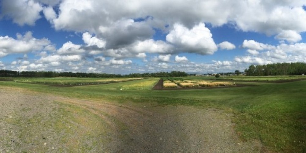 A panoramic shot of some of our plots – Kim Jo Bliss