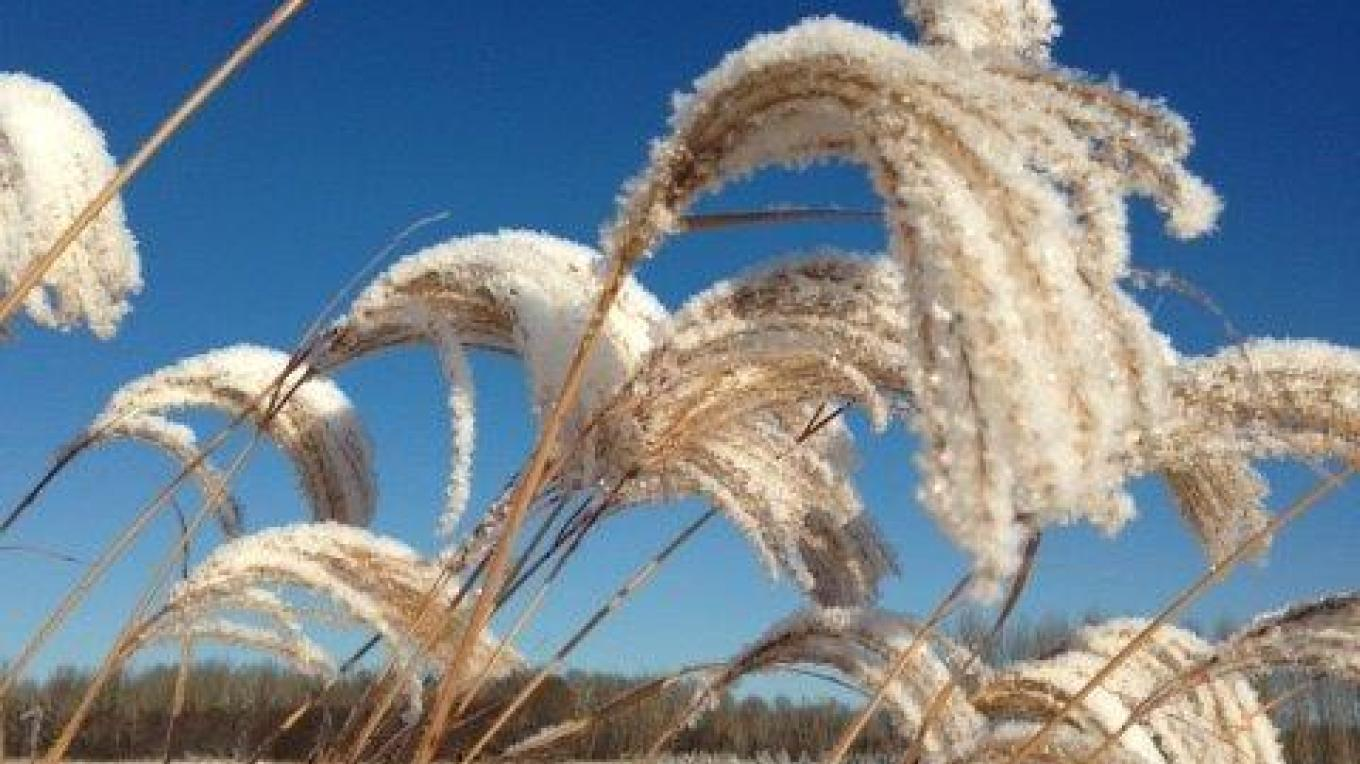 Miscanthus in late fall – Kim Jo Bliss