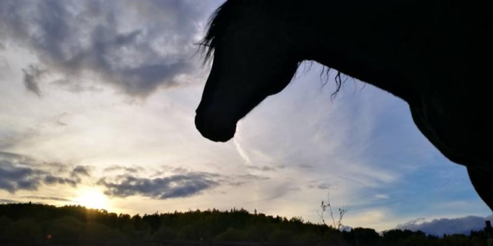 Whispered Dreams Ranch