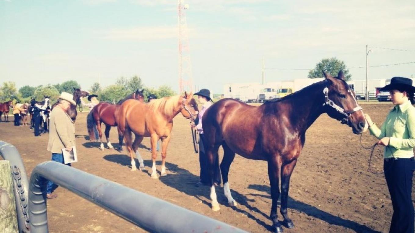 Horses are a big part of the draw for the fair, proving to be big attraction for young and old alike. – RRVAS Volunteers