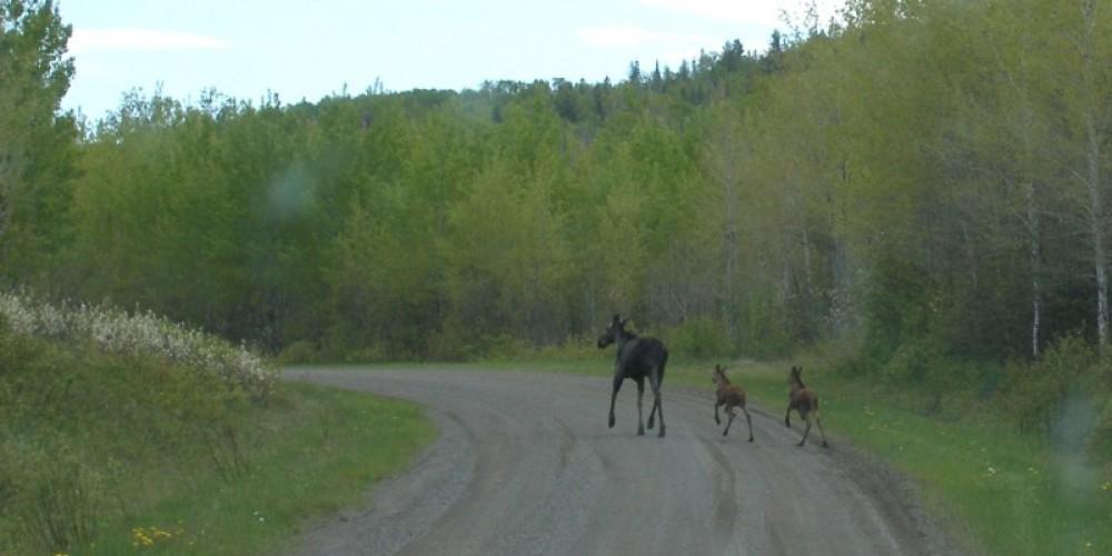 Moose – Park Staff