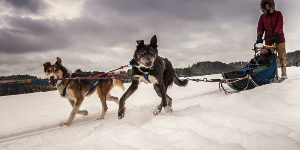 Wilderness Inquiry has offered dogsledding experiences in the BWCA since 1981 when we first teamed up with now famous arctic explorer Will Steger. – K. Heppner