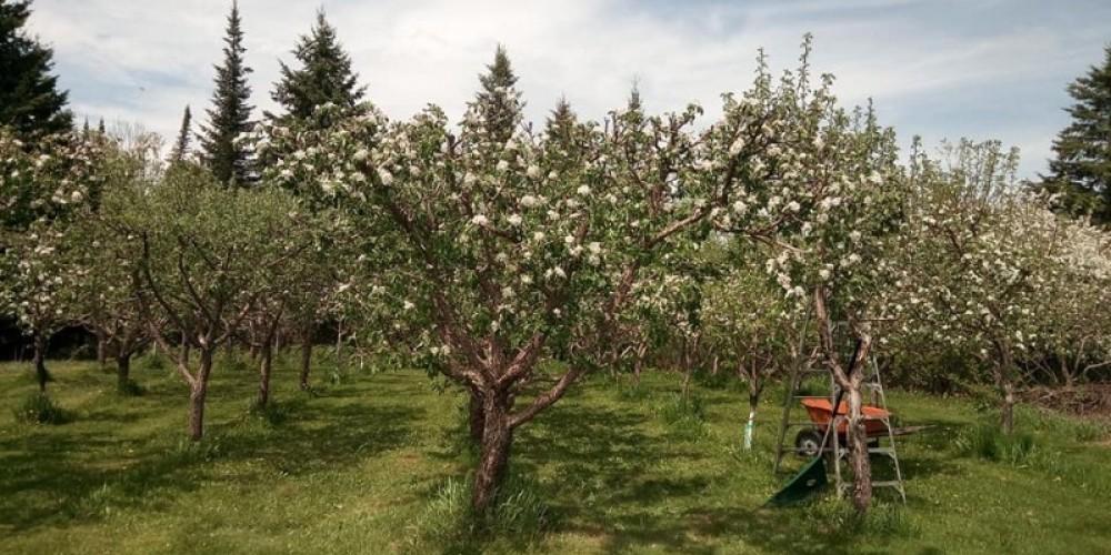 Orchard in full view – Elaine Mackenzie