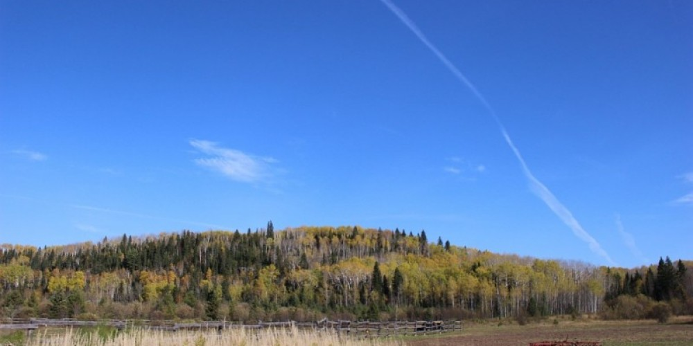 Mountain Meadow B and B
