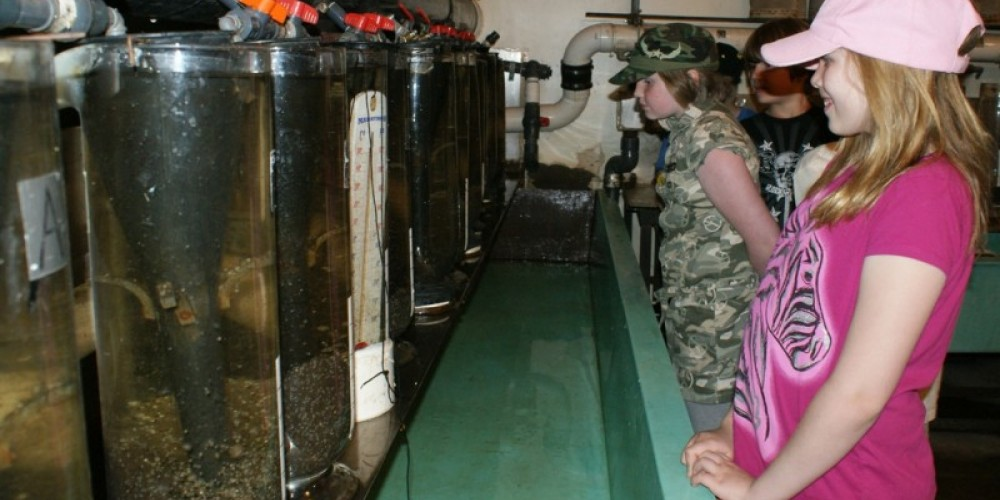 A group of interested youngsters are checking out the incubating walleye fry at the Atikokan Fish Hatchery – Atikokan Progress