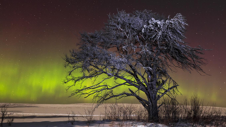 Northern lights – Susan Dykstra