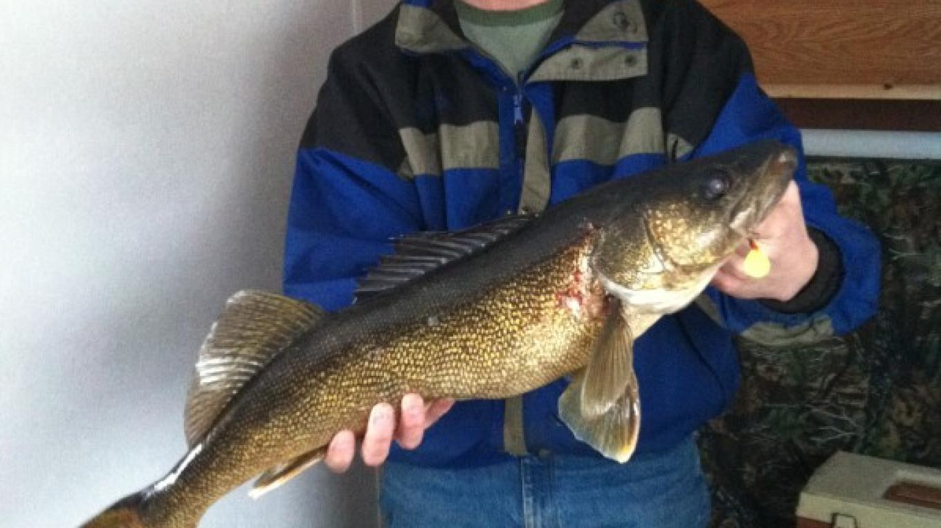 "29.5"" Walleye through the ice – Northernair Lodge"