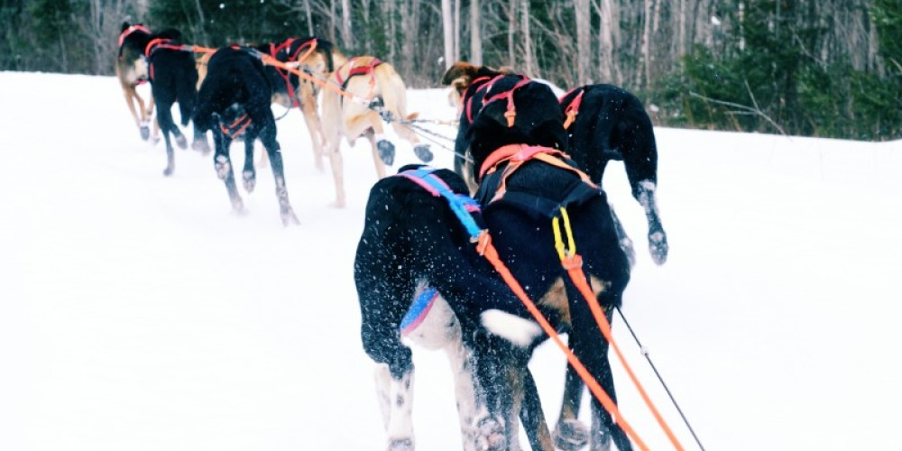 A view from the dog sled