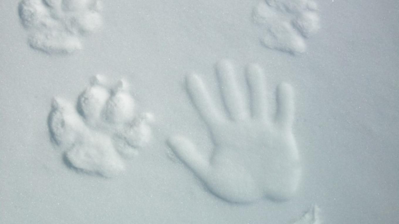 Big wolf prints in Voyageurs national park – Eric Johnson