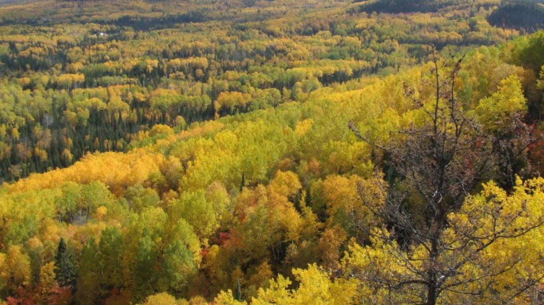 fall leaves – Elaine Mackenzie