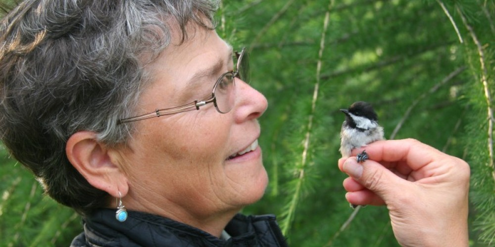 Participants might have the opportunity to release a banded songbird. – Wolf Ridge Environmental Learning Center