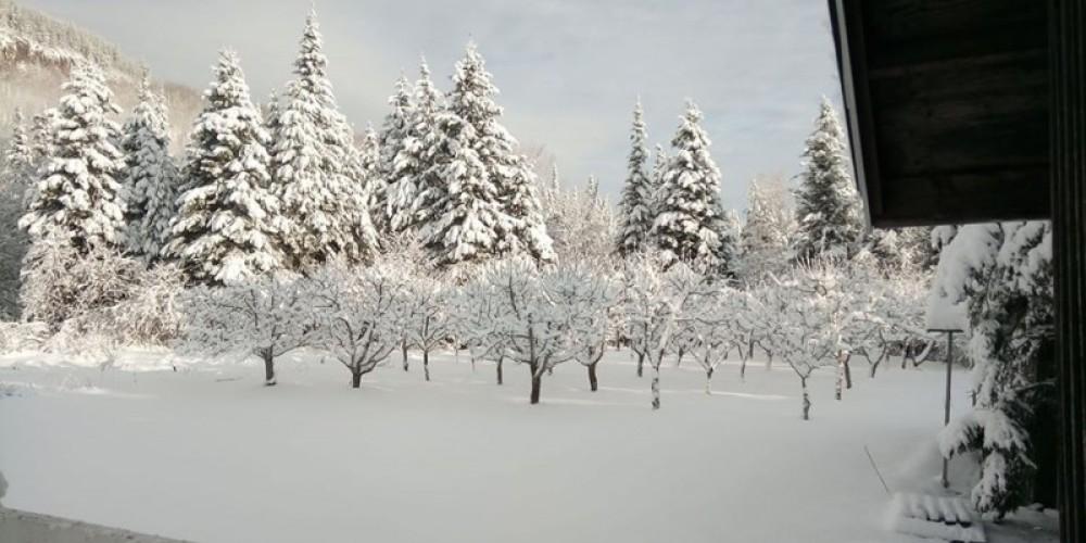 Winter Orchard – Elaine Mackenzie