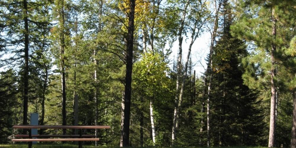Campsite – Embarrass Township