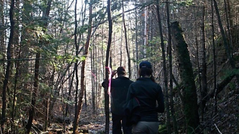 Rock Cut on the Centennial Trail – susan prom