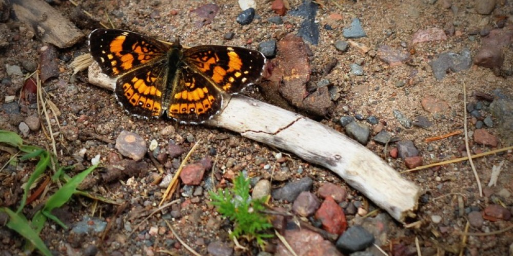 The Byway offers great wildlife sightings. – Michelle Pierson