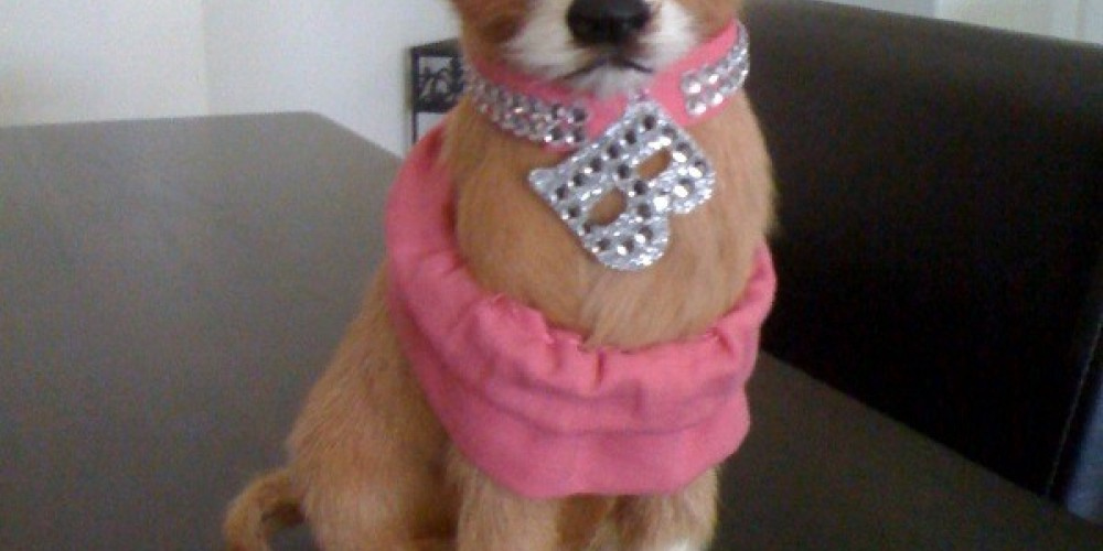 THIS REALISTIC CHIHUAHUA DOG HELPED ALEX WIN THE MISS SOUTHWEST FLORIDA, MISS AMERICA PAGEANT! – Vicki