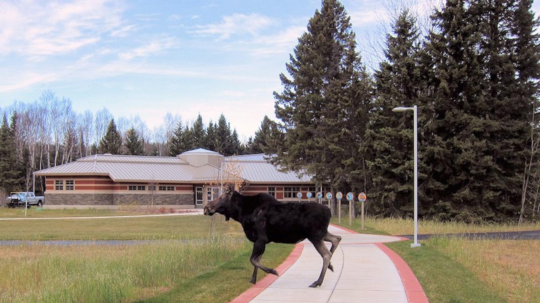 Moose! – Rick Novitsky