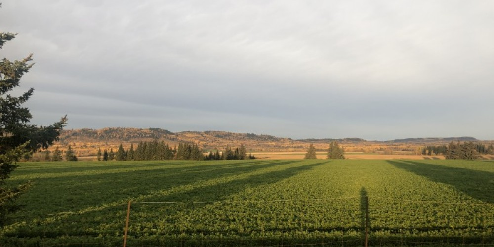 Highway 61 overlooking farm fields during morning sun – Courtney Lanthier