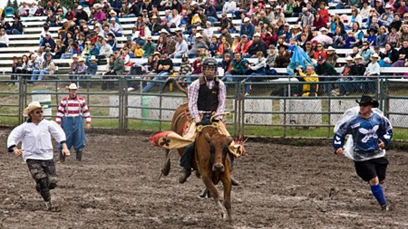 The best performing steers are specially bred in Mexico for rodeo duty. – David Thomas