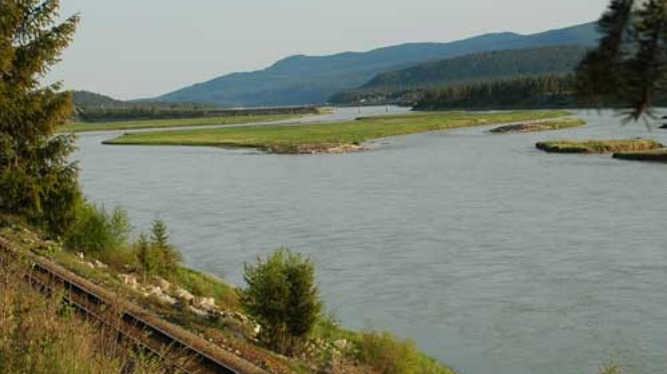 The Kootenay River begins in a marshy area upstream of its confluence with the Vermilion River. – Ian Cobb