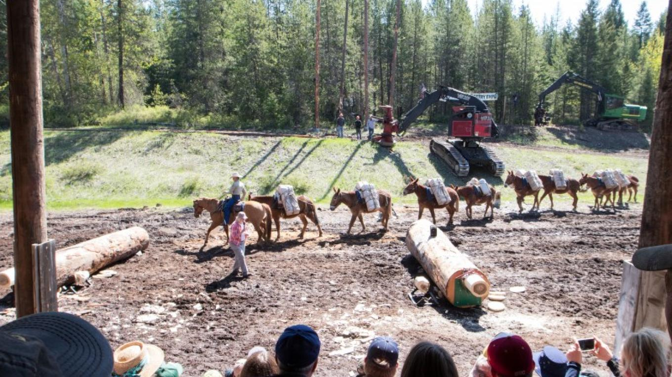 Family Forestry Expo Demonstration – Sheena Pate