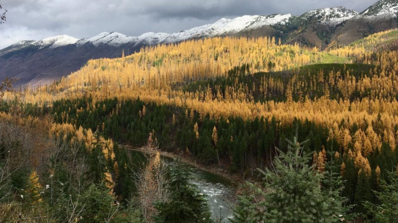Larches showing their fall color near the Inn. – Dave and Chris Handley