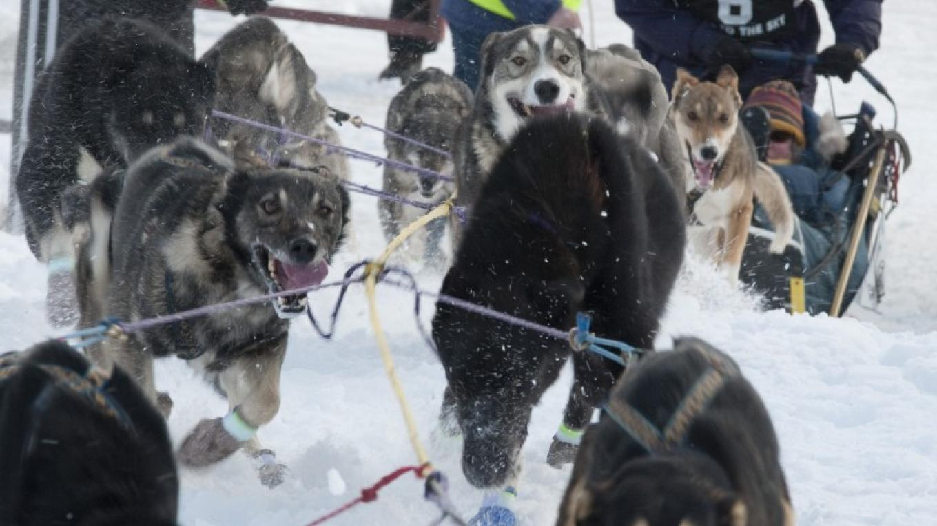 Jenny Greger's dogs kick up the snow at the 350-Mile restart near Lincoln. Greger, from Bozeman, MT won the 2014 Race to the Sky 350. – Roger Dey