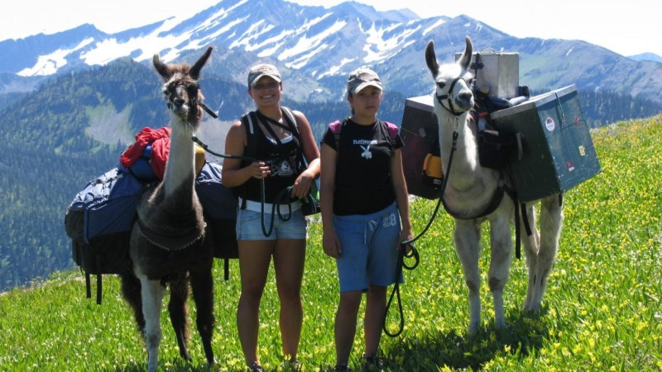 Llama treks along the Alpine Trail provide stunning views. – Swan Mountain Llama Trekking