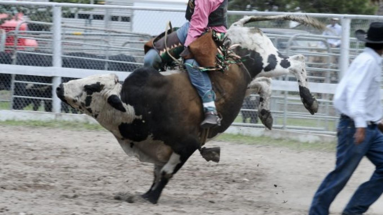 Bull riding - 2013 – Roger M. Dey